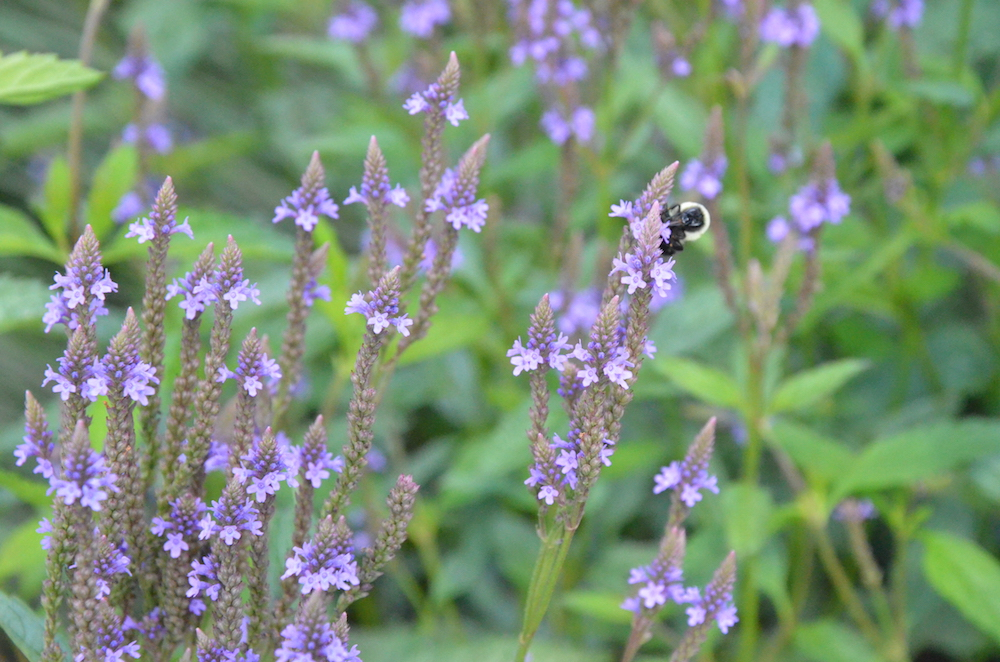 Native Plants Supporting Pollinators