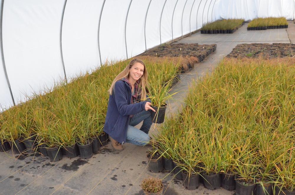 Jill Delmarva Native Plants