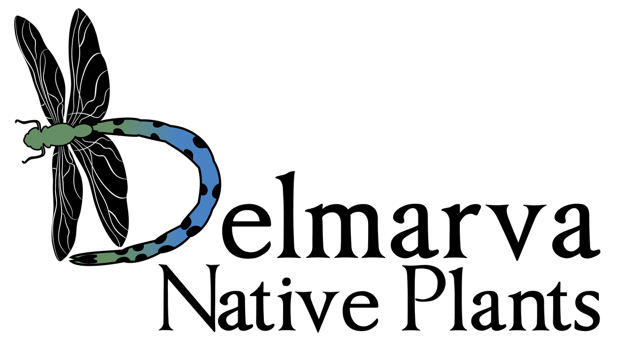 Delmarva Native Plants